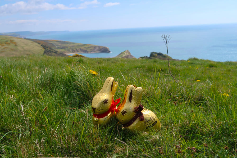 Spring walk: the Purbeck coast - Travel with Penelope & Parker